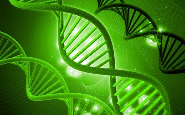 Molécule ADN