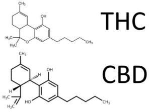 Différences entre le CBD (cannabidiol) et le THC